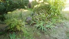松山市鷹子町 寺院様 お庭の手入れ